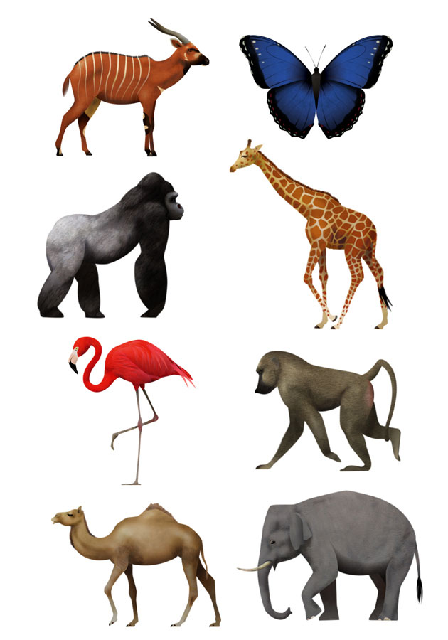 Bongo, butterfly, Gorilla, Gifra, Flamingo, Dromedar, Asian Elephant, animal illustrations, Martin Schwartz, Antwerp Zoo