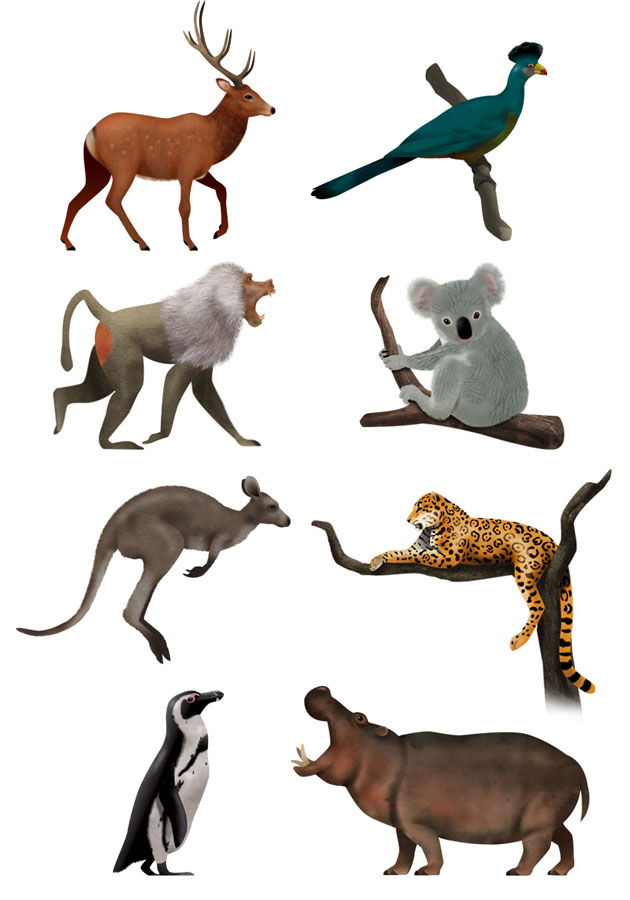 Sika deer, baboo, koala bear, wallaby, jaguar, penguin, hippo, Antwerp zoo, animal illustrations, Martin Schwartz