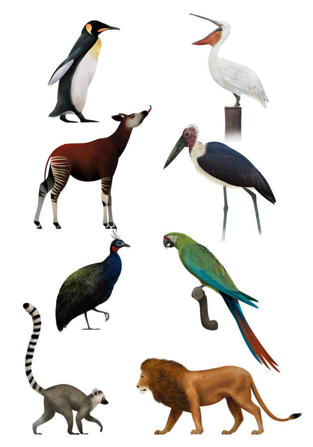 Penguin, Pelican, Okapi, Marabu Stork, Lemur, Lion, animal illustrations, Antwerp Zoo, Martin Schwartz