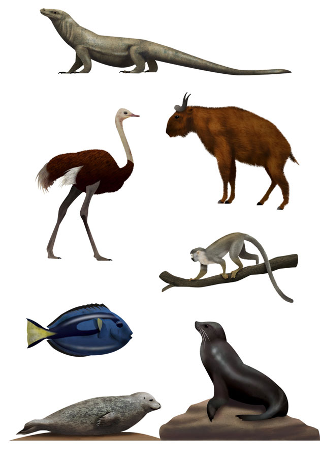 Komodo dragon, ostrich, scull monkey, seal, sea lion, animal illustrations, Antwerp Zoo, Martin Schwartz